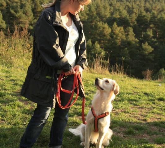 Aktive Bewegungstherapie für Hunde