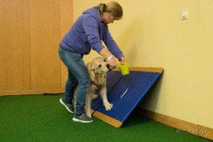 canine fitness erlangen