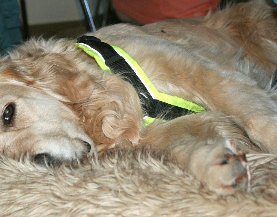 Massage Workshop für Hunde